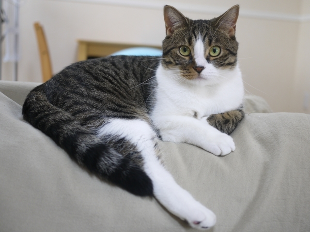 猫のお留守番 コムギくん編。_a0143140_15521266.jpg