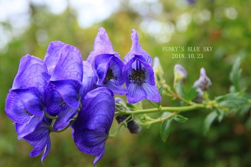 咲き残った花*たち_c0145250_10543773.jpg
