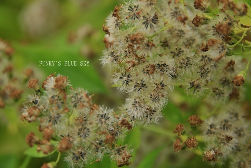 咲き残った花*たち_c0145250_10544030.jpg