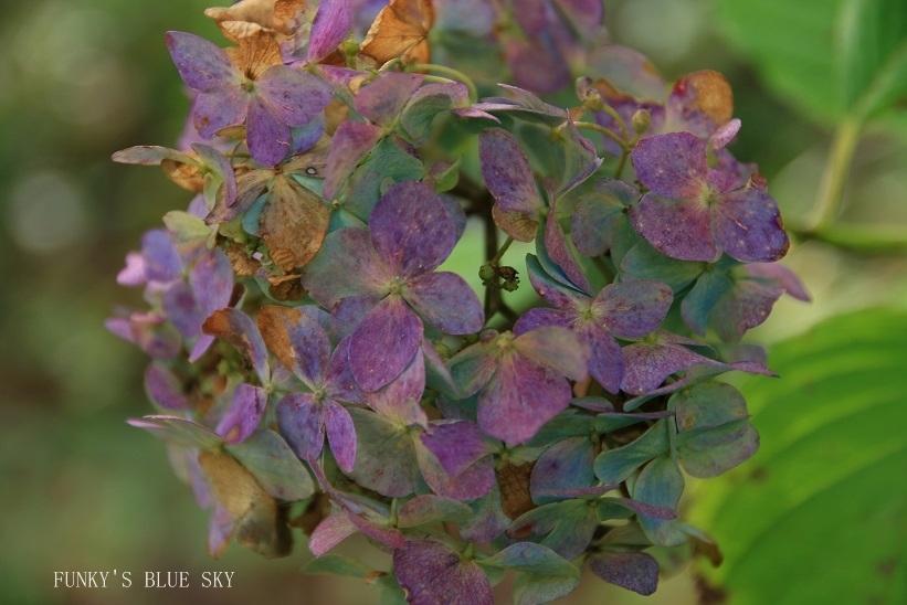 咲き残った花*たち_c0145250_10550227.jpg