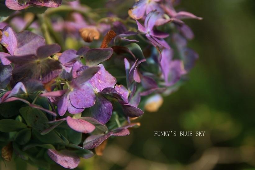 咲き残った花*たち_c0145250_10550585.jpg
