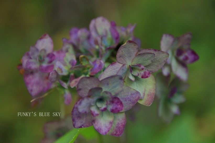 咲き残った花*たち_c0145250_10550891.jpg