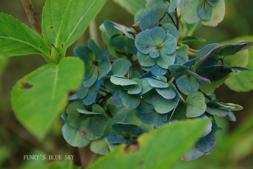 咲き残った花*たち_c0145250_10551319.jpg