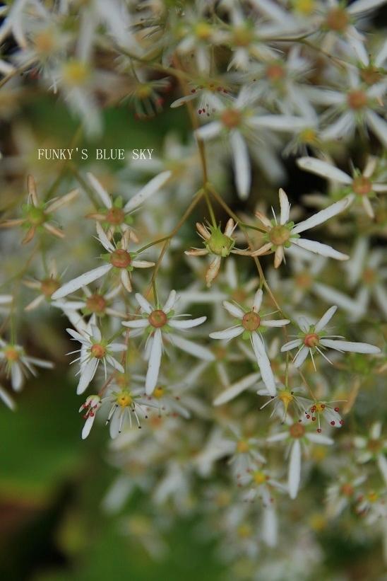 咲き残った花*たち_c0145250_10551844.jpg