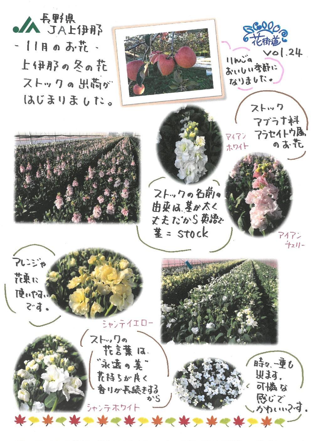 草花紹介ポップ!vol.24_d0062298_20364682.jpg