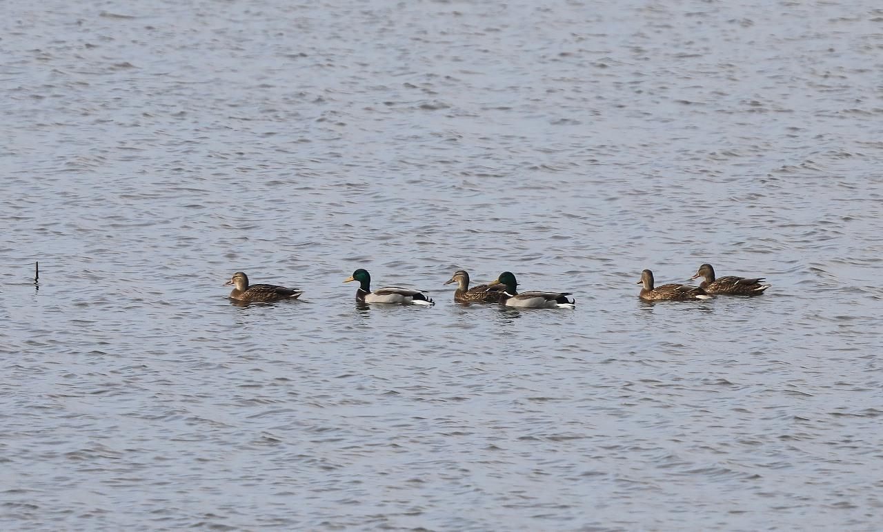 湿原にて_f0296999_16321298.jpg
