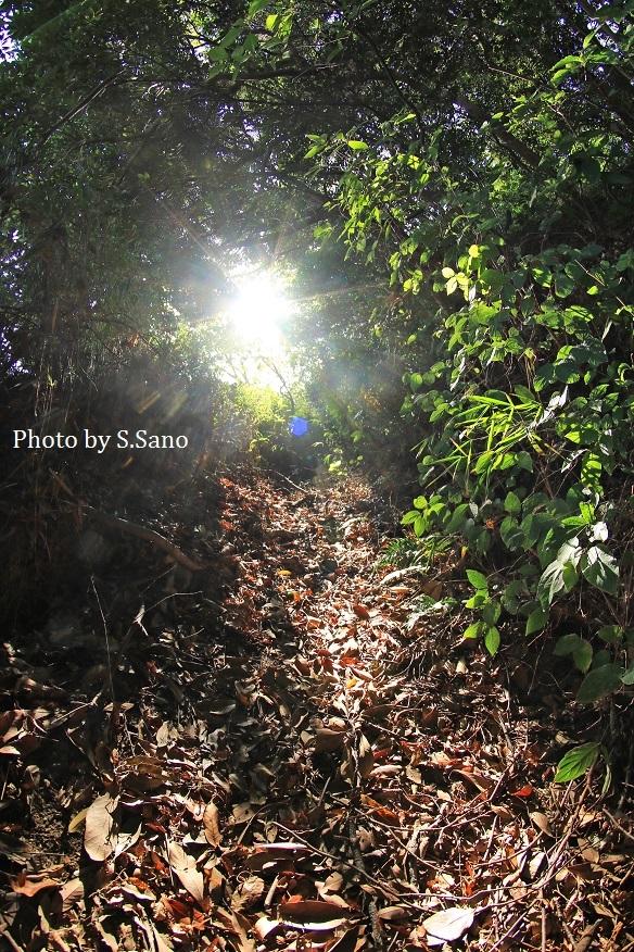 観音崎周辺の地域を散歩(2018年11月)_b0348205_23564546.jpg
