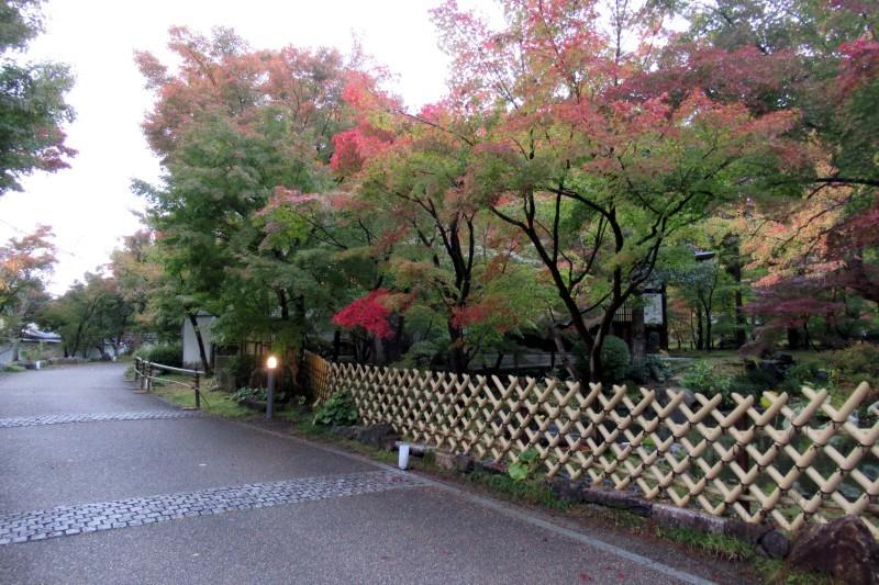 永観堂 紅葉の始まり_e0048413_22565781.jpg