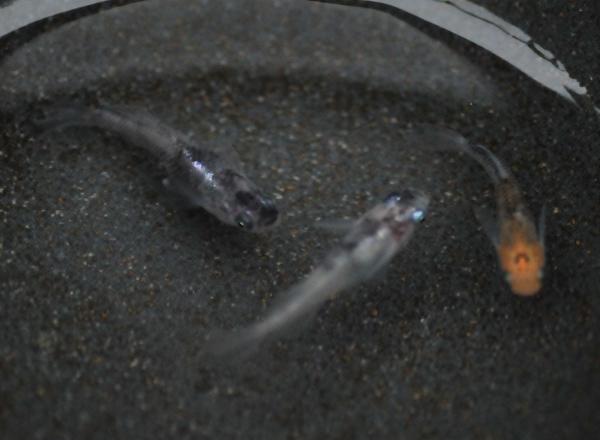 万葉・ヒカリ三色の容器から_e0097534_1539206.jpg