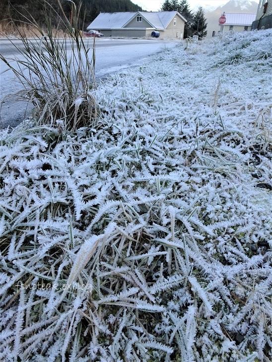 霜の世界 最後の収穫_d0356844_04120698.jpg