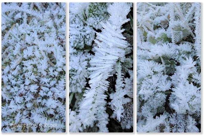 霜の世界 最後の収穫_d0356844_04124274.jpg