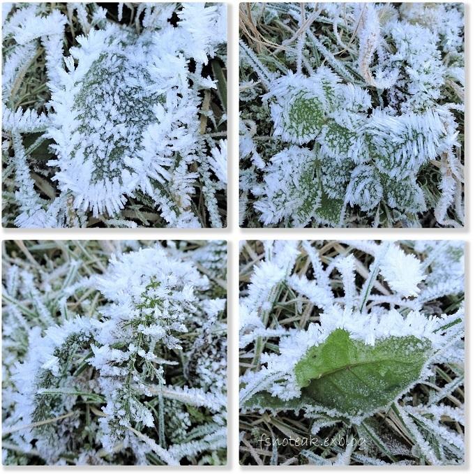 霜の世界 最後の収穫_d0356844_04125857.jpg