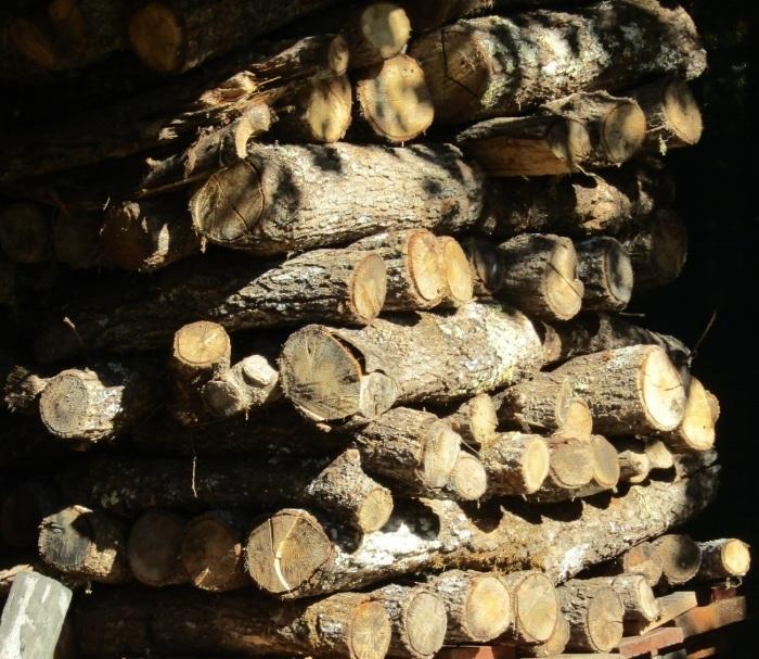 カザリスの森、立冬_b0287748_04383211.jpg