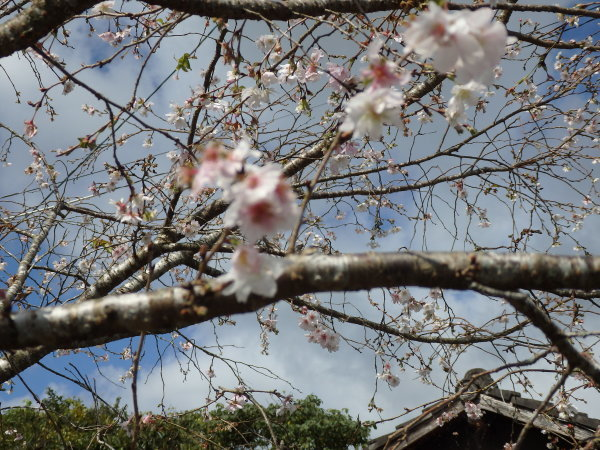 福岡県の秋月_f0337554_14224532.jpg