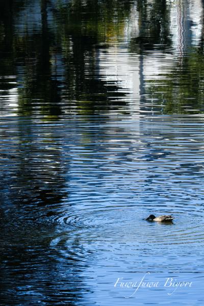 近所の池 **_d0344864_21364502.jpg