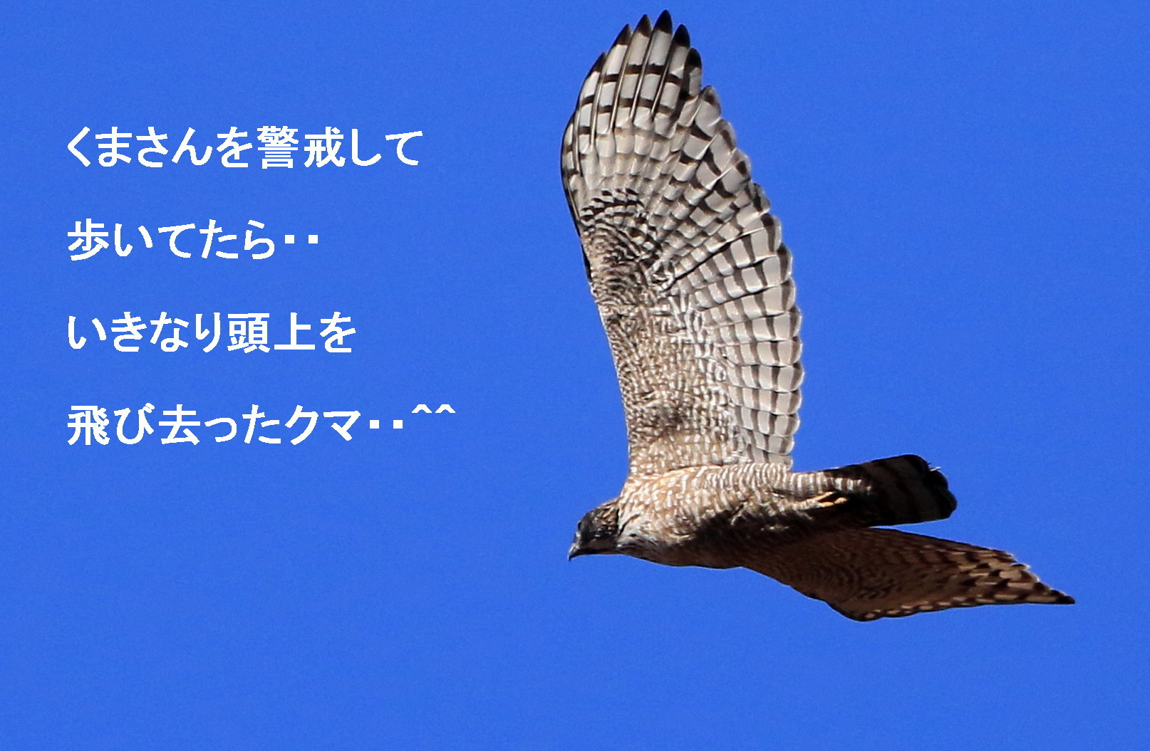 ソニーとキヤノン ヤマセミなど_c0229170_21242686.jpg