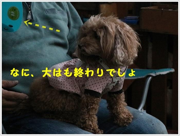 b0175688_20112874.jpg