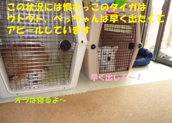 f0121712_23481412.jpg