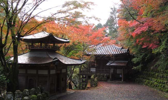 愛宕寺(おたぎでら)紅葉の盛り_e0048413_22075488.jpg