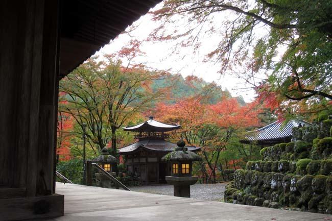 愛宕寺(おたぎでら)紅葉の盛り_e0048413_22075863.jpg
