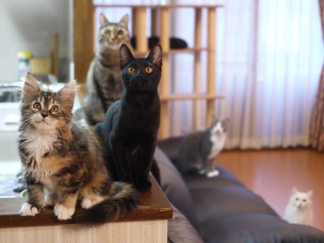 猫のお留守番 天ちゃん麦くん茶くん〇くんAoiちゃん編。_a0143140_21232129.jpg