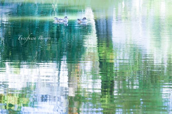 近所の池 **_d0344864_21164195.jpg