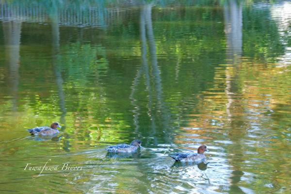 近所の池 **_d0344864_21330991.jpg