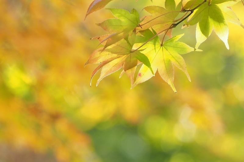 紅葉_e0348392_20053109.jpg
