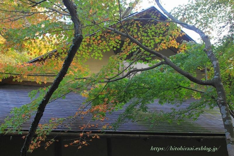 北鎌倉 明月院 秋模様_f0374092_22194597.jpg