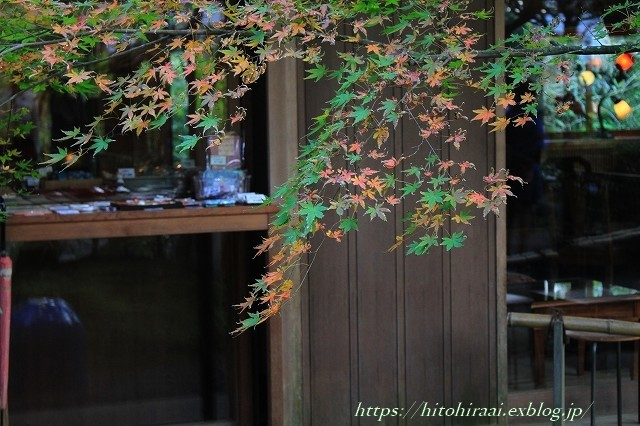 北鎌倉 明月院 秋模様_f0374092_22203608.jpg