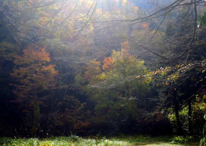 朝が拡散する林道口_a0214206_00104848.jpg
