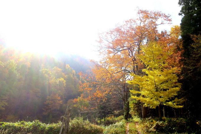 朝が拡散する林道口_a0214206_00105887.jpg