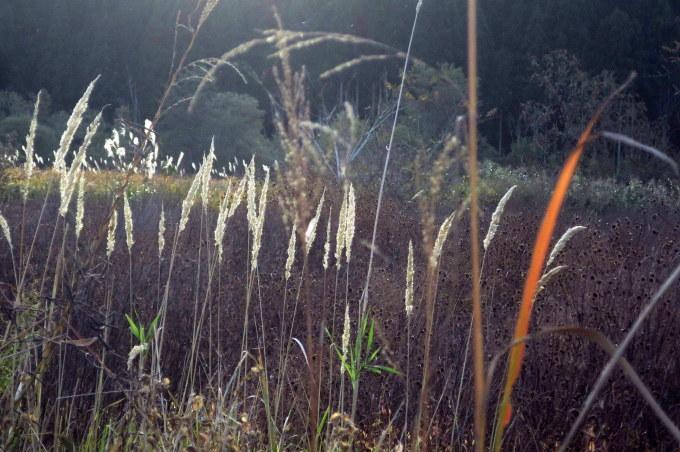 朝が拡散する林道口_a0214206_00112144.jpg