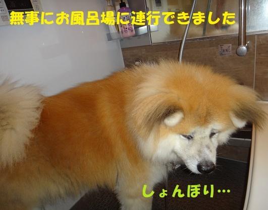 f0121712_14021979.jpg