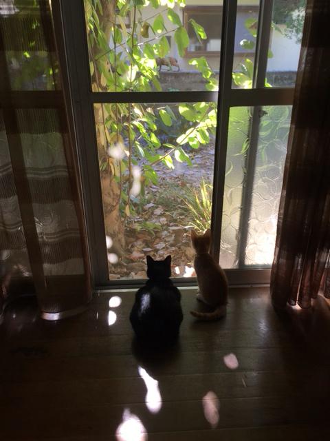 今日の猫たちと山口マオさんカレンダー到着とマオさん個展のお知らせとてぶ店長といただきものと牧野伊三夫さんのレシピ - ひよこ雑貨店(7冊目)