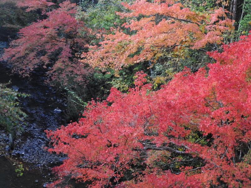 吟松寺と千束の紅葉_e0048413_20525694.jpg