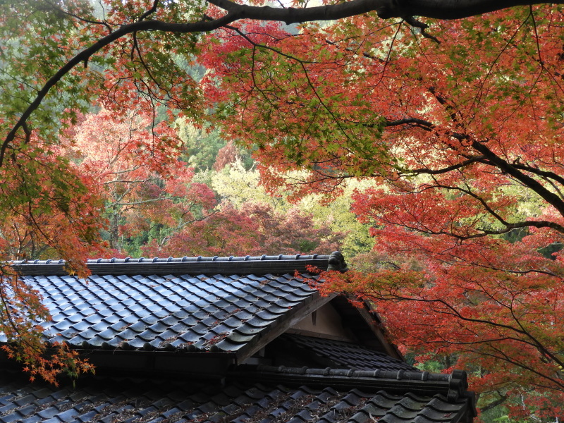 吟松寺と千束の紅葉_e0048413_20535045.jpg