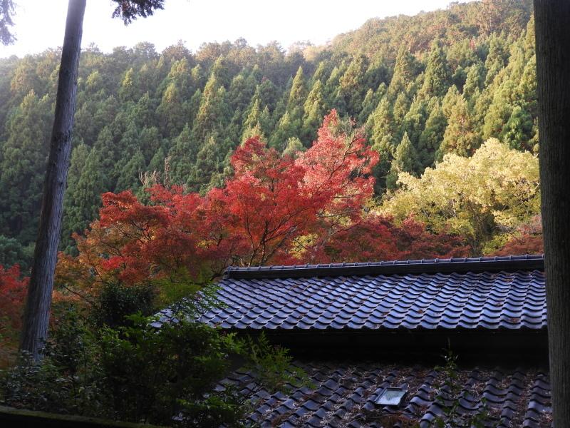 吟松寺と千束の紅葉_e0048413_20541543.jpg
