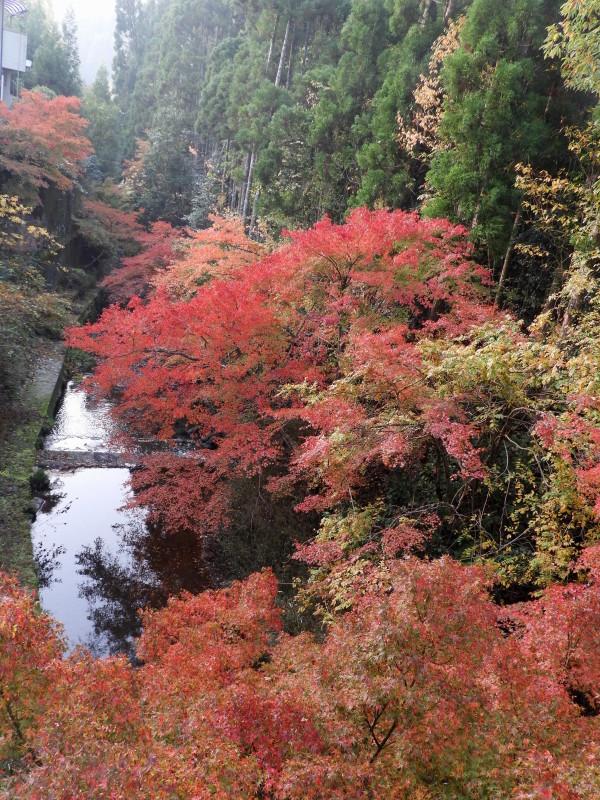 吟松寺と千束の紅葉_e0048413_20590001.jpg
