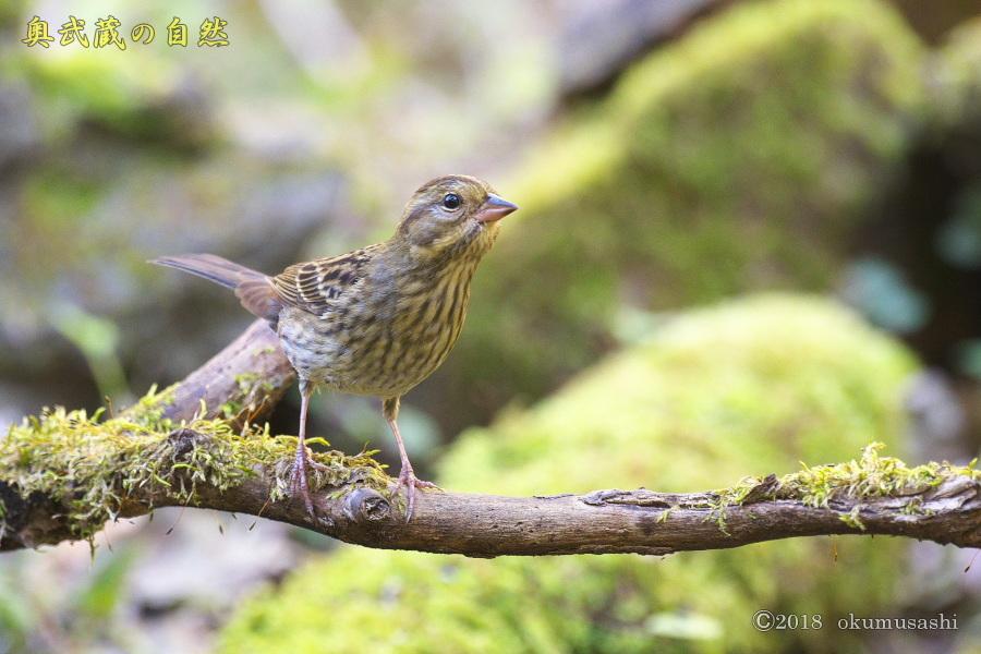 冬鳥2号_e0268015_19232432.jpg