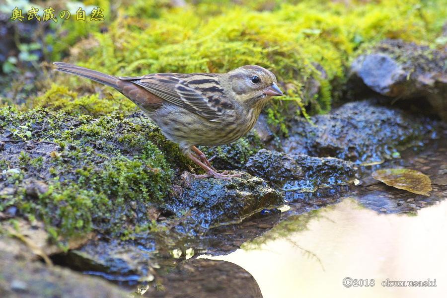 冬鳥2号_e0268015_19240181.jpg