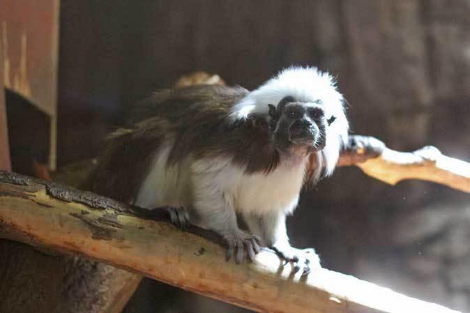 なかよしマーモセットと色々と様変わりな小獣館(上野動物園)_b0355317_20462590.jpg