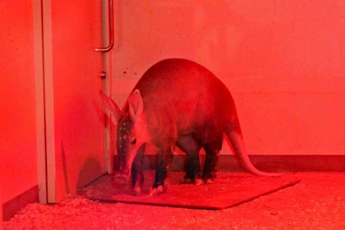 なかよしマーモセットと色々と様変わりな小獣館(上野動物園)_b0355317_21010297.jpg