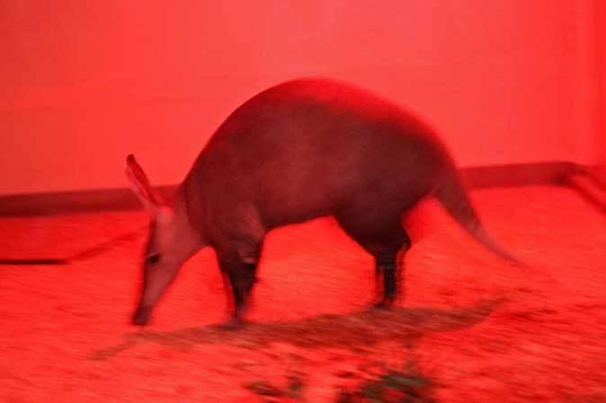 なかよしマーモセットと色々と様変わりな小獣館(上野動物園)_b0355317_21042107.jpg
