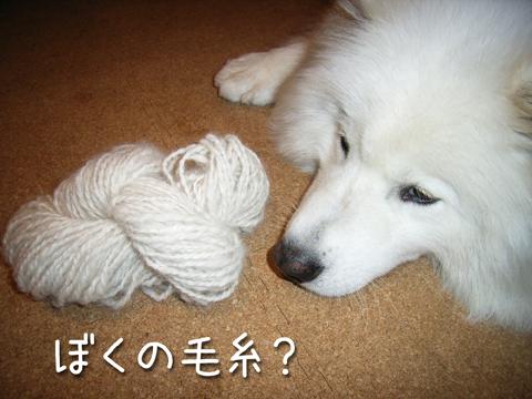 【クロ毛100%ブランケット】メイキング2 サンプル_c0062832_19504298.jpg