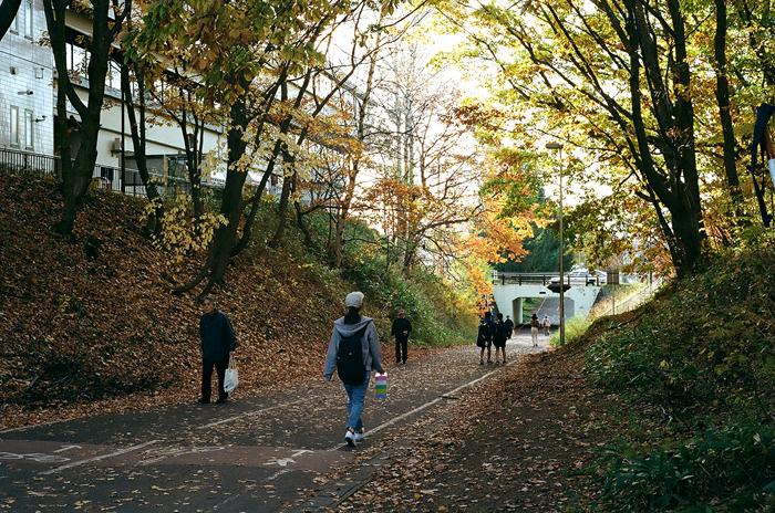 陽だまりロードの落ち葉と暖冬_c0182775_16534285.jpg