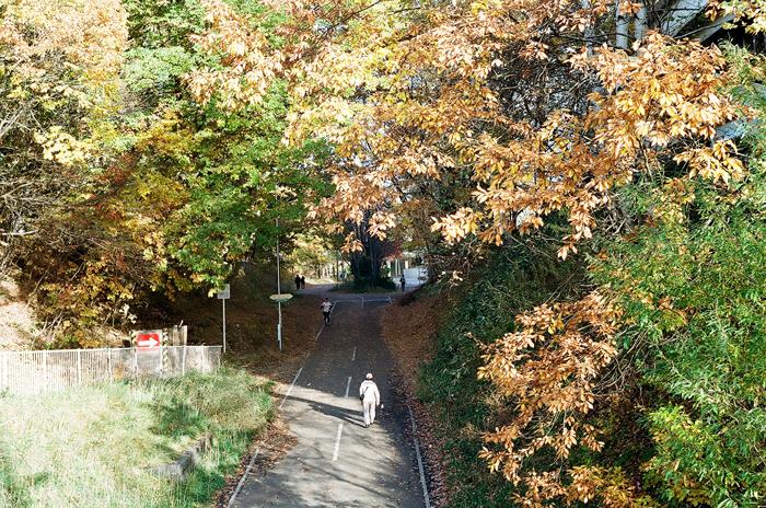 陽だまりロードの落ち葉と暖冬_c0182775_16594237.jpg