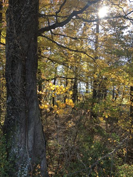 秋の八ヶ岳へ_b0183404_09483210.jpg