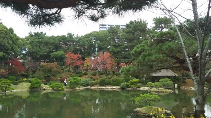縮景園紅葉、そろそろ見頃です_e0094315_14223019.jpg