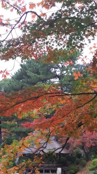 縮景園紅葉、そろそろ見頃です_e0094315_14243949.jpg